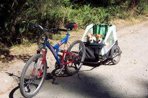 Biking on Savary Island with the dogs riding in style!