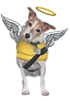 RIP - Roz our beloved doggie