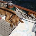 Doggie navigation